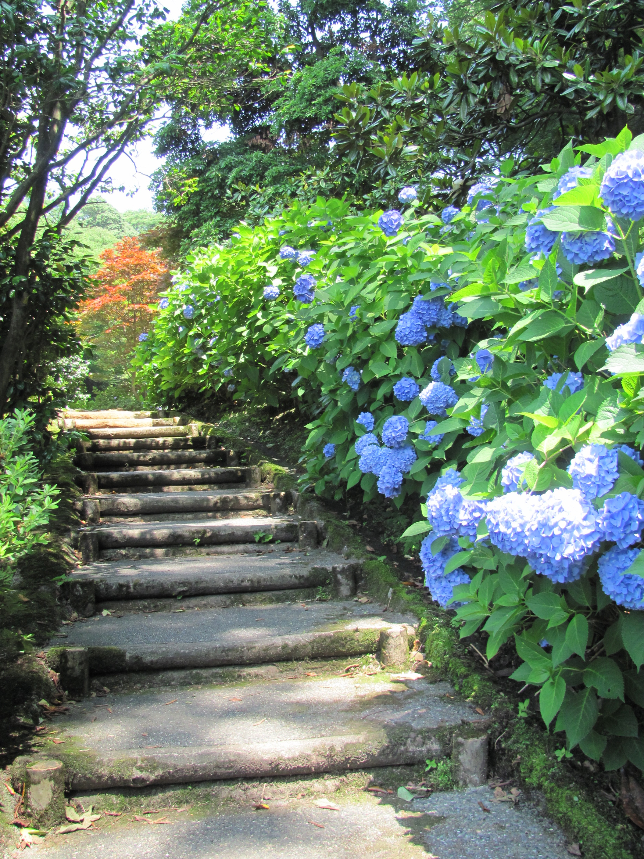 In Search of Kanazawas Hydrangeas Utatsuyama Iris Garden The