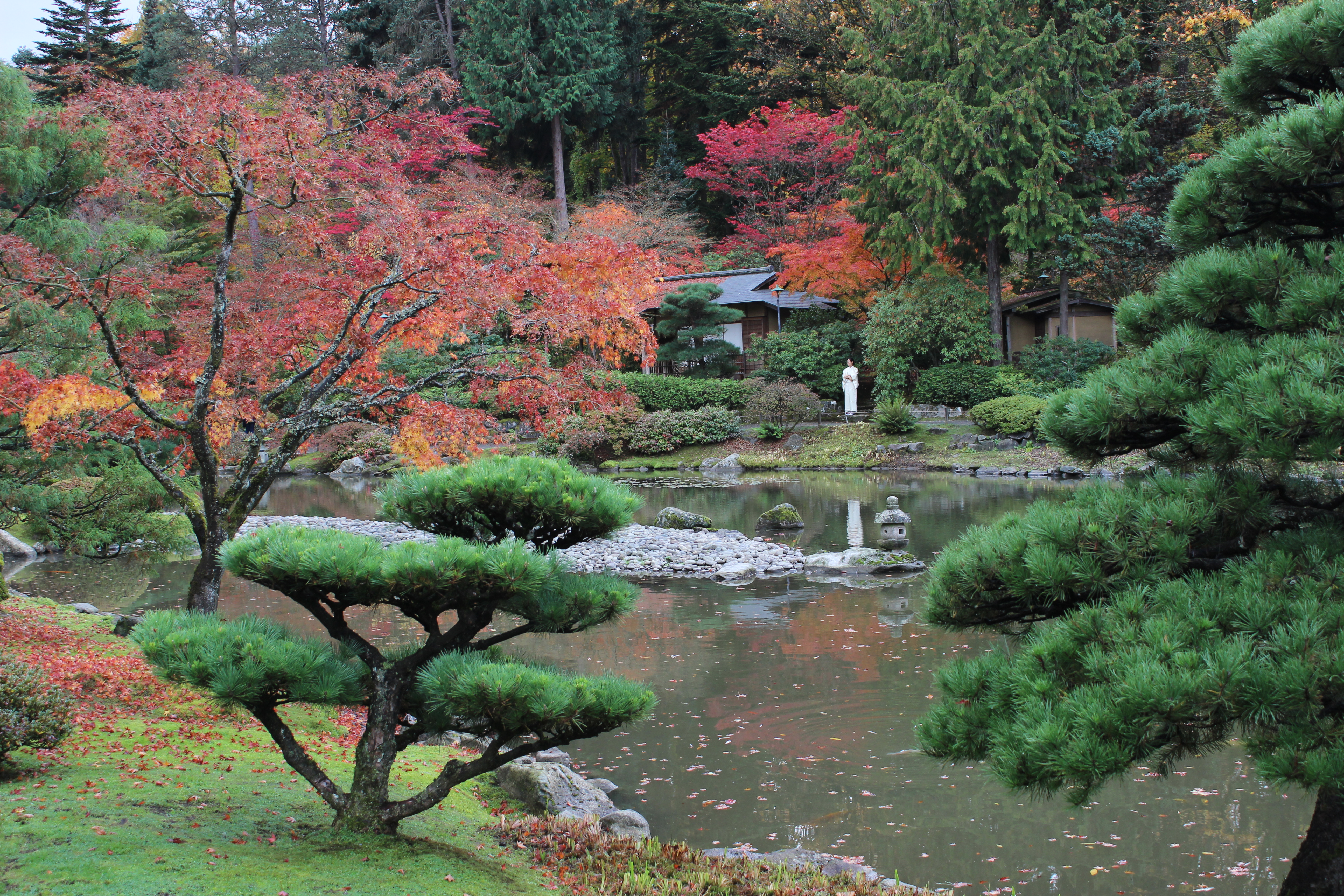 japanese garden seattle momiji at the seattle japanese garden the lobster 103