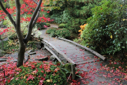 Seattle Japanese Garden | The Lobster Dance