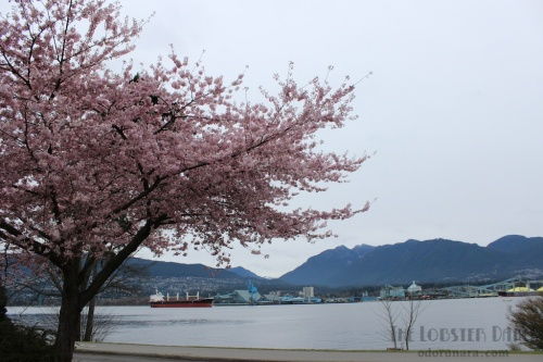 Vancouver Sakura 2015 | The Lobster Dance 15 (1)