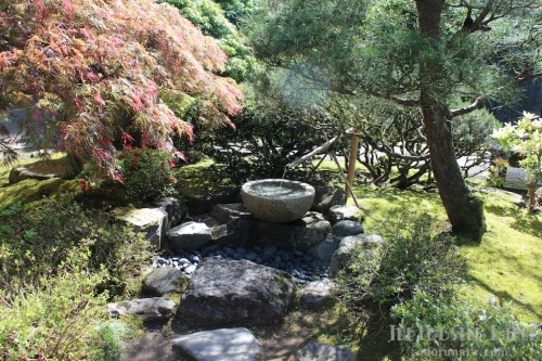 Portland Japanese Garden  | The Lobster Dance 15