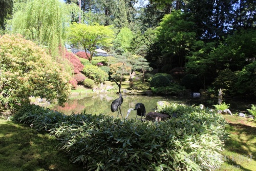 Portland Japanese Garden  | The Lobster Dance 4