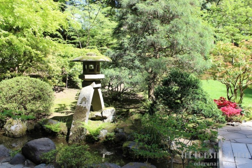 Portland Japanese Garden  | The Lobster Dance 6