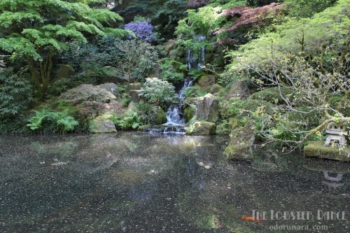 Portland Japanese Garden  | The Lobster Dance 7