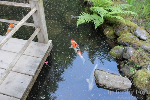 Portland Japanese Garden  | The Lobster Dance 8