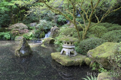 Portland Japanese Garden  | The Lobster Dance 9